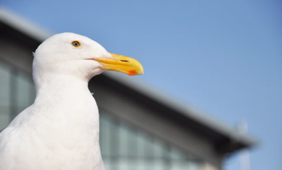 gull hospital stock image copy