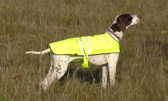wildlife management dog