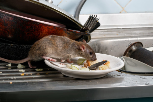 Rat Kitchen 1024x683 1