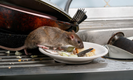 Rat Kitchen 1024x683