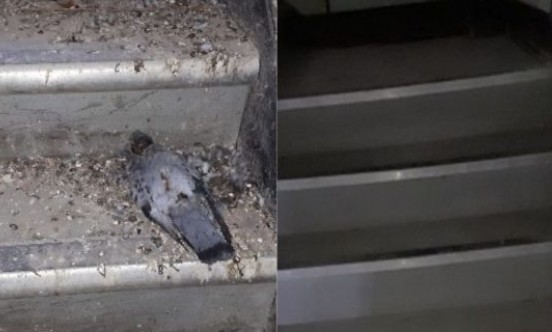 VPS UK Ltd stairs with pigeons and guano
