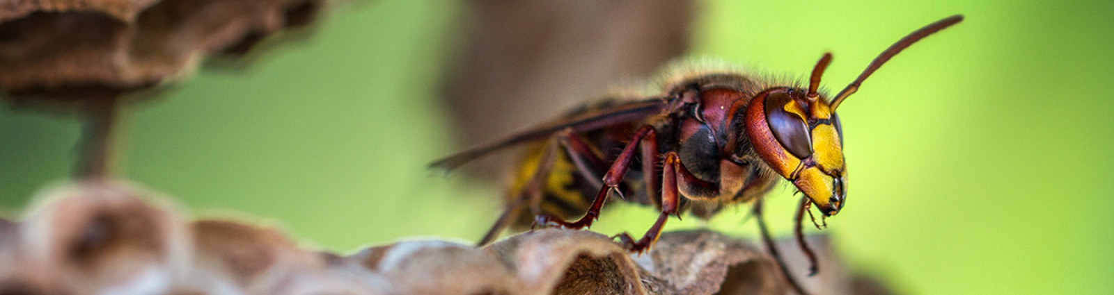 macro lens photography of yellow and red bee 928973
